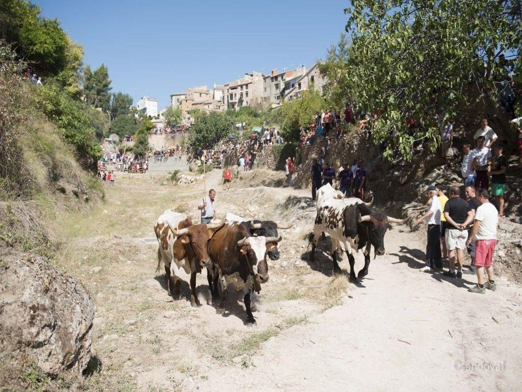 Encierros taurinos en la Sierra del Segura