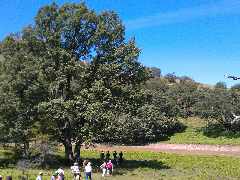 Parque Natural de los calares del mundo y de la sima Torca de los Melojos