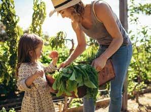 Cultivando un huerto ecológico